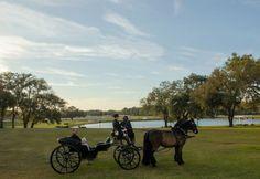 The Grand Oaks wedding carriage. #wedding #antique #Victorian #carriage  #Florida #GrandOaksResort