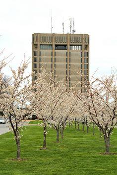 Brock University, Schmon Tower (home for five years!)