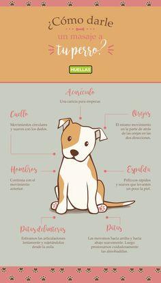 El masaje perfecto para tu perro