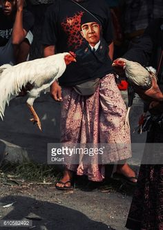 Stock Photo : Cock Fighting in Bali, Indonesia