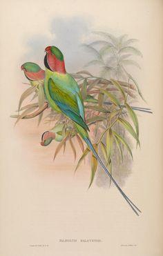 v 6 - Aves de Asia / por John Gould. - Biodiversity Heritage Library