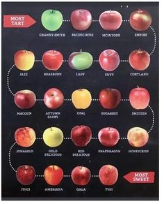 Apple chart from tart to sweet, pick the perfect apple Fruit Recipes, Apple Recipes, Cooking Recipes, Cooking Tips, Food Tips, Food Ideas, Meal Ideas, Gourmet Recipes, Dinner Ideas