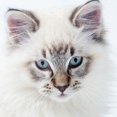 White kitty closeup portrait by Saltodemata on @creativemarket