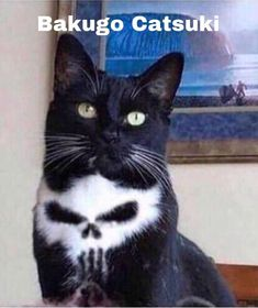 Cat With Skull in His Fur Sparks Photoshop Battle - World's largest collection of cat memes and other animals My Hero Academia Memes, Hero Academia Characters, My Hero Academia Manga, Boku No Hero Academia, Skull Cat, Anime Tumblr, All Meme, Animal Jokes, Cute Funny Animals