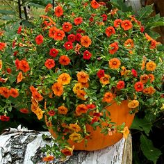 Pumpkin Planter How To- Pumpkin planters make great fall decorations. It's a quick and easy project that is fun and satisfying. Pumpkin planters look great in groups or by themselves. You can use them indoors or out.
