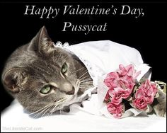 42 Best Valentine Cats And Kittens Images Cats Pets Dog Cat