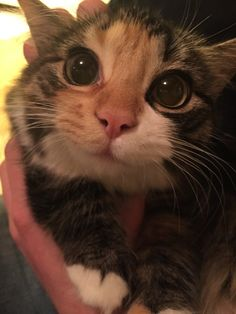 the cutest cat eyes you ever did see.