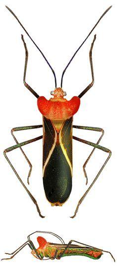 b1d42f5bea164381d793f389fd673044--beautiful-bugs-beetles.jpg (236×544)