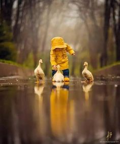 Adorable creatures ducklings...