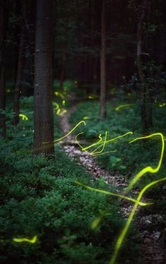 Time lapse photos of fireflies in the woods.