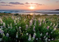 Carmel Beach and spring flowers at sunset--a breathtaking snapshot captured by our friend and photographer, Kip Evans.
