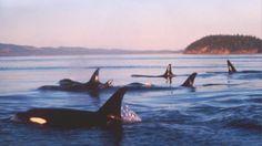 Off Whidbey Island Kodiak Alaska, Anchorage Alaska, Places To Travel, Places To See, Kodiak Island, Alaska Travel, Alaska Trip, North To Alaska, Marine Life