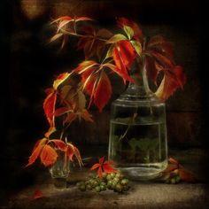 #still #life #photography • photo: Осенние этюды 3 | photographer: Бутвина Татьяна | WWW.PHOTODOM.COM