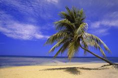 """View Of Ocean From Beach With Palm Tree"" - Beach and Coastal Views posters and prints available at Barewalls.com"