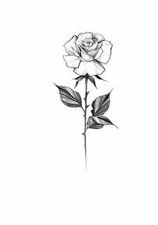 White Background Tattoo For Man And Woman Rose Stem Tattoo Small Rose Tattoo White Rose Tattoos