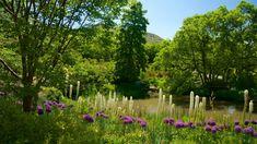 Red Butte Gardens, Salt Lake City Utah Salt Lake City Utah, Gardens, Plants, Red, Outdoor Gardens, Plant, Garden, House Gardens, Planets