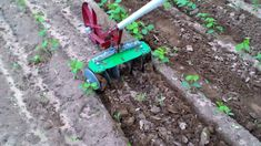 Easy Make Inter cultivator for vegetable and weed control - Big Garden, Easy Garden, Guava Plant, Agricultural Tools, Organic Weed Control, Farm Lifestyle, Garden Works, Metal Pergola, Automotive Decor
