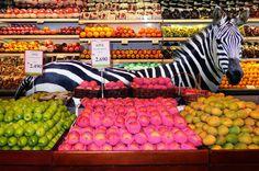 shopping zebra