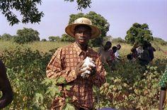 Servindi » África: Agricultores de Malí pelean por sus tierras | Servicios en Comunicación Intercultural Servindi