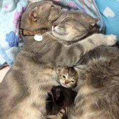 Awwwwwww, snuggled up tight!