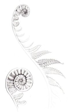 fern tattoos - Google Search: