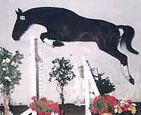 Donner Bube jumping. Canadian Warmblood Horse Breeders Association - Stallions