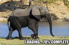 Elefante engraçado!  Veja mais em: http://www.jacaesta.com/elefante-engracado/