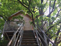 Casa sull'albero Quercia - Il Giardino dei semplici Manta Cuneo - Bed and breakfast, Vivaio di rose antiche e case sull'albero