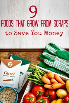 9 Foods You Can Regrow from Scraps to Save Money - Don't throw your vegetable scraps away! These 9 foods that grow from scraps can help save you money, feed your family fresh veggies and more! They're perfect for beginner gardeners to learn with too!