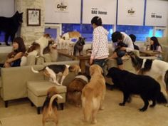 Posts about Dog Cafe written by cassiechoi Dog Cafe, Hongdae, Korean Traditional, Cassie, South Korea, Dogs And Puppies, To Go, Pets, Animals
