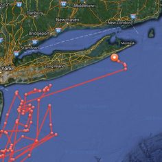 In case you aren't tracking the 3500 lb 16 foot Great White Shark heading straight towards East Hampton I've got you covered.  Ocearch.org by jessseinfeld