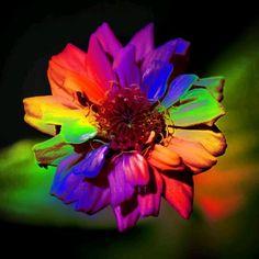 Amazing Flowers, Love Flowers, Happy Sunday Messages, Diy Crafts Hacks, Beautiful Gif, Cellphone Wallpaper, Zinnias, Cool Artwork, Rainbow