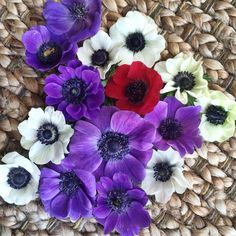 Anemonies Local Color, Flower Farm, Cut Flowers, Beautiful Flowers, February, Spring, Plants, How To Make, Instagram
