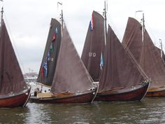 Skûtsjes are typical Frisian boats that will be participating in a sailing race around all of the large Frisian lakes in 10 days.