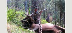 Poor Man's Elk Hunt