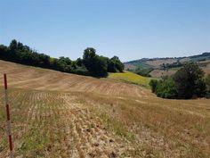 Vendesi terreno agricolo di mq 21.300, sito in zona montone di fermo.Il terreno è sostanzialmen