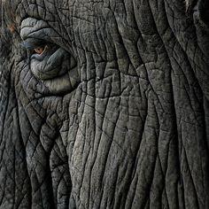 more elephant wrinkles Elephant Anatomy, Elephant Eye, Elephant Artwork, Ceramic Elephant, Indian Elephant, Elephant Baby, Elephant Photography, Wildlife Photography, Animal Photography