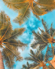 Palm trees in Boracay, Philippines Sarah-Louise ( Background Images Wallpapers, Iphone Background Wallpaper, Cellphone Wallpaper, Background Pictures, Ocean Wallpaper, Summer Wallpaper, Nature Wallpaper, Palm Tree Art, Palm Trees