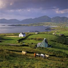 View over Allihies and Ballydonegan Bay, Beara Peninsula, County Cork, Munster, Republic of Ireland Photographic Print by Stuart Black at AllPosters.com