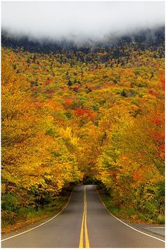 Smuggler's Notch State Park, Vermont.  We don't have a proper fall here on the West coast of California.