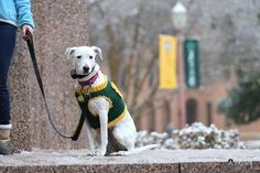 A snowy campus won't keep this pup from being Baylor Proud!