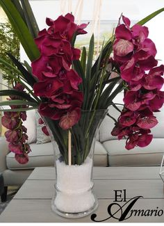 Orquidea morada, flower arrangements, Phaleanopsis Orchid; orchids
