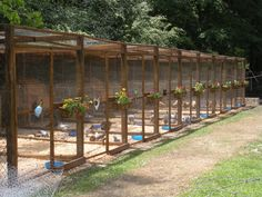 New chicken pens we built.