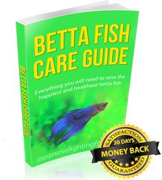 betta-fish-guide Betta Fish Toys, Betta Fish Care, Freshwater Aquarium, Aquarium Fish, Betta Tank, Fishing For Beginners, Fishing World, Beta Fish, Siamese Fighting Fish