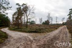 Gortelse bos en heide 2014 http://blog.qdraw.nl/gelderland/gortelse-bos-en-heide-2014/
