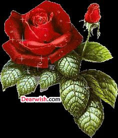 Fan Art of Rose and a Bud for fans of Roses 9790690 Glitter Pictures, Flower Pictures, Rosas Gif, Love You Gif, Glitter Flowers, Flowers Gif, Flower Phone Wallpaper, Glitter Graphics, Love Painting