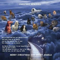 Merry Christmas to our sweet angels - Christmas Memories ♥