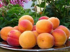 Apricot (Choli) Its a Famous fruit of Gilgit Baltistan Pakistan. Shades Of Peach, Peach Trees, Just Peachy, Orange Recipes, Belleza Natural, Fruits And Vegetables, Gardening Vegetables, Container Gardening, Home Food
