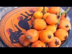 (12) Container Grown Yehuda Loquat Tree. www.pepesplants.com - YouTube