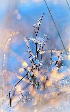 Winter Dew